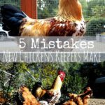5 mistakes new chicken keepers make