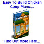 Bill keene – creator of creating a chicken house