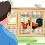 Building a chicken house (with pictures) – wikihow