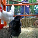 Funky chicken house tour