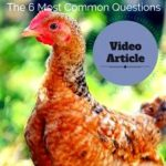 Solutions to questions regarding my chickens
