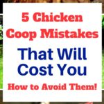 The Ten mistakes of raising chickens