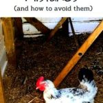 What your chicken house will include (plus…mistakes to prevent) [podcast]