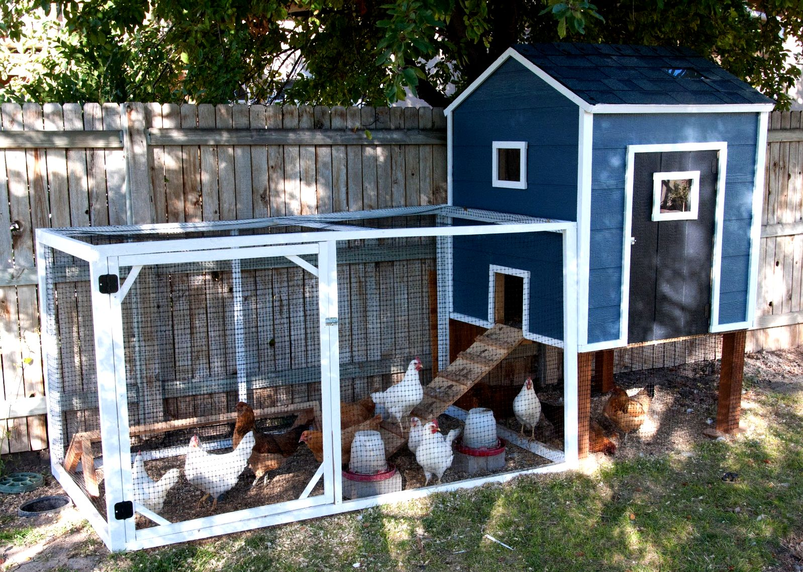 Chicken coops to construct review designs and