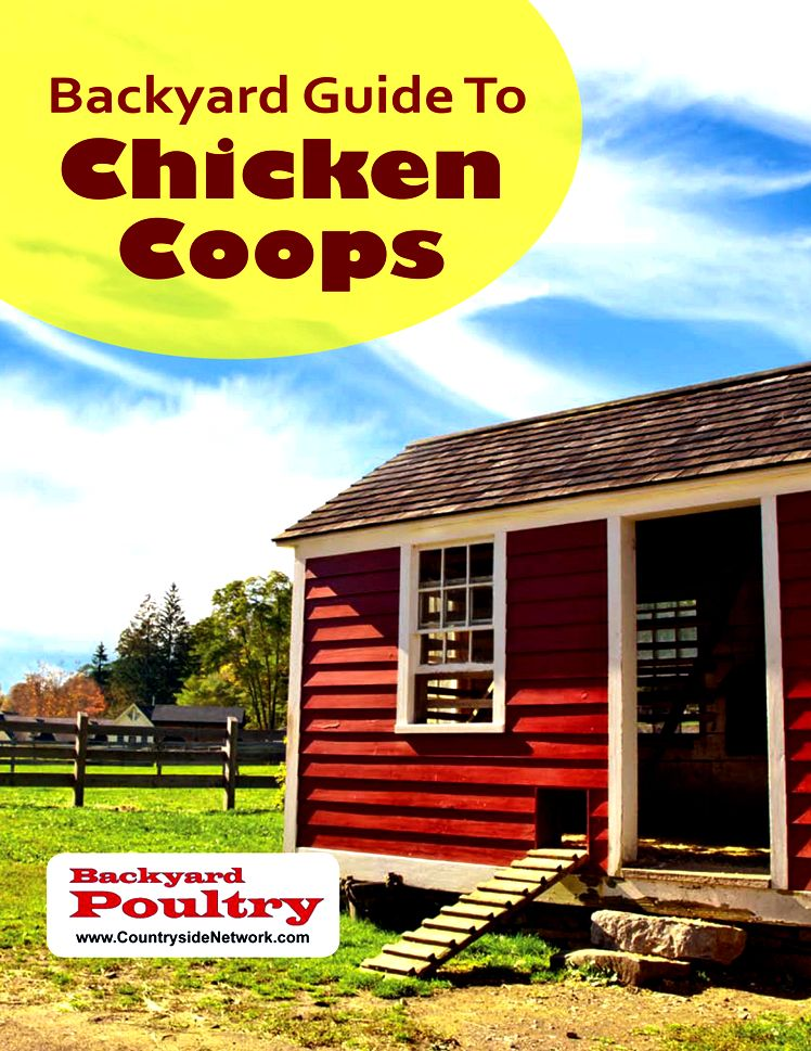 Chicken Housing: Everything you need to know about chicken coop designs for the best coops
