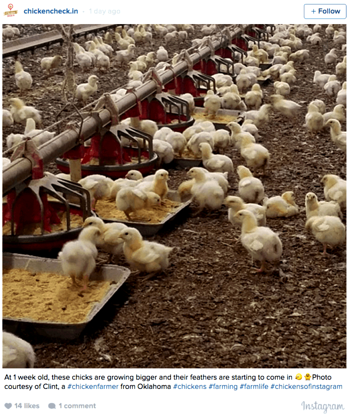National chicken council announces new sources on broiler welfare would be to