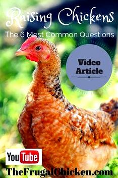 Solutions to questions regarding my chickens which brings me great