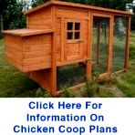 Cheap Chicken Coops – What To Look For