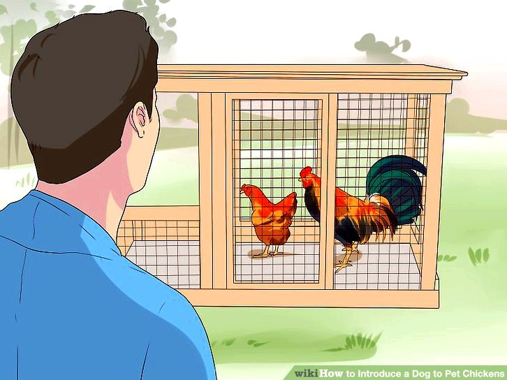 Building a chicken house (with pictures) - wikihow as essential as the