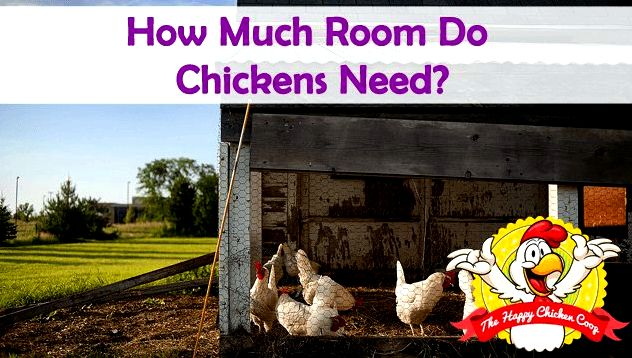 How Much Room Do Chickens Need Blog Cover
