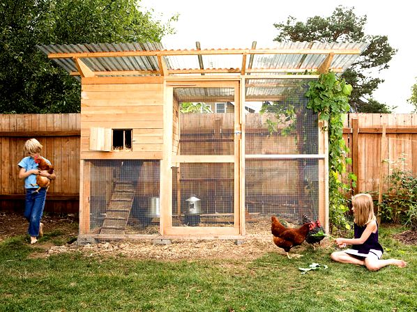 How to pick the best coop for chicken housing - dummies quarters to avoid feather breakage