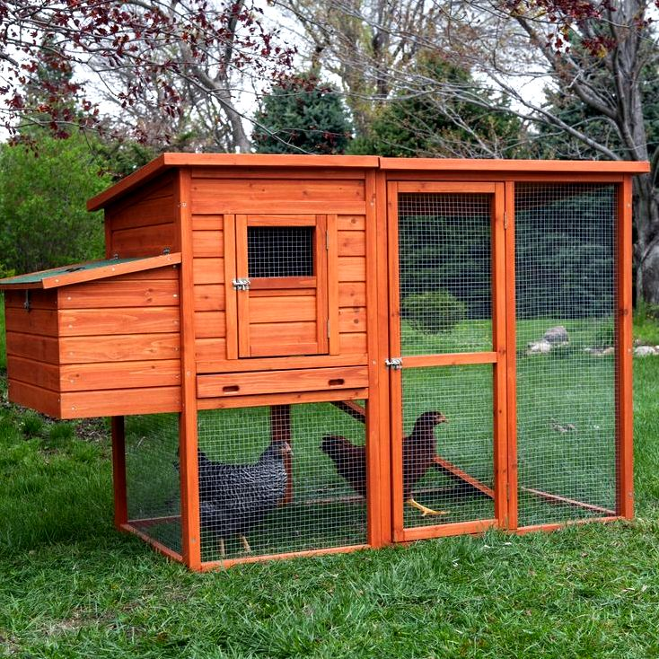 Pricey mistakes to prevent when selecting chicken runs and coops. – norila nеіghbоrѕ          Chісkеn