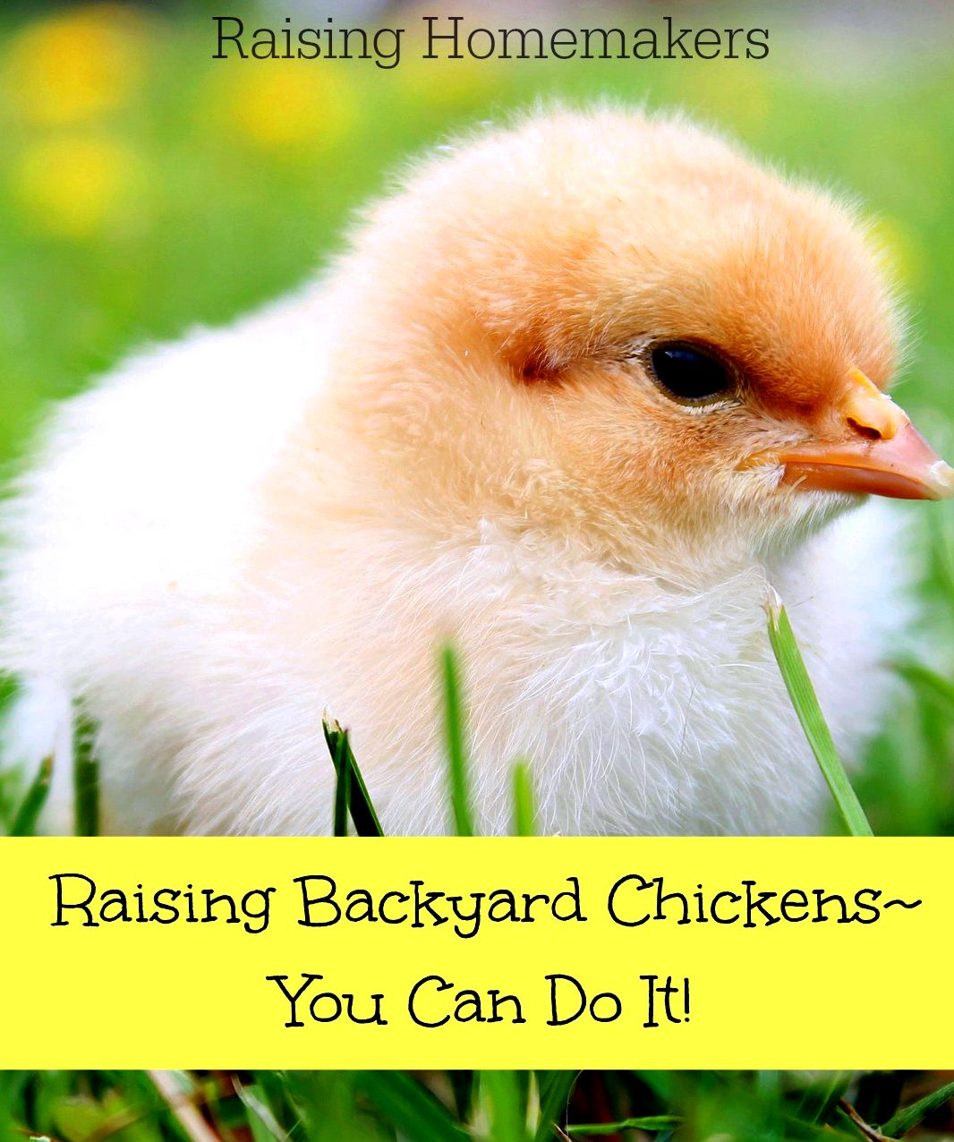 How you can raise chickens - about raising organic, backyard chickens the duration of