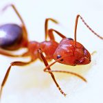 Pest control Brandon MS
