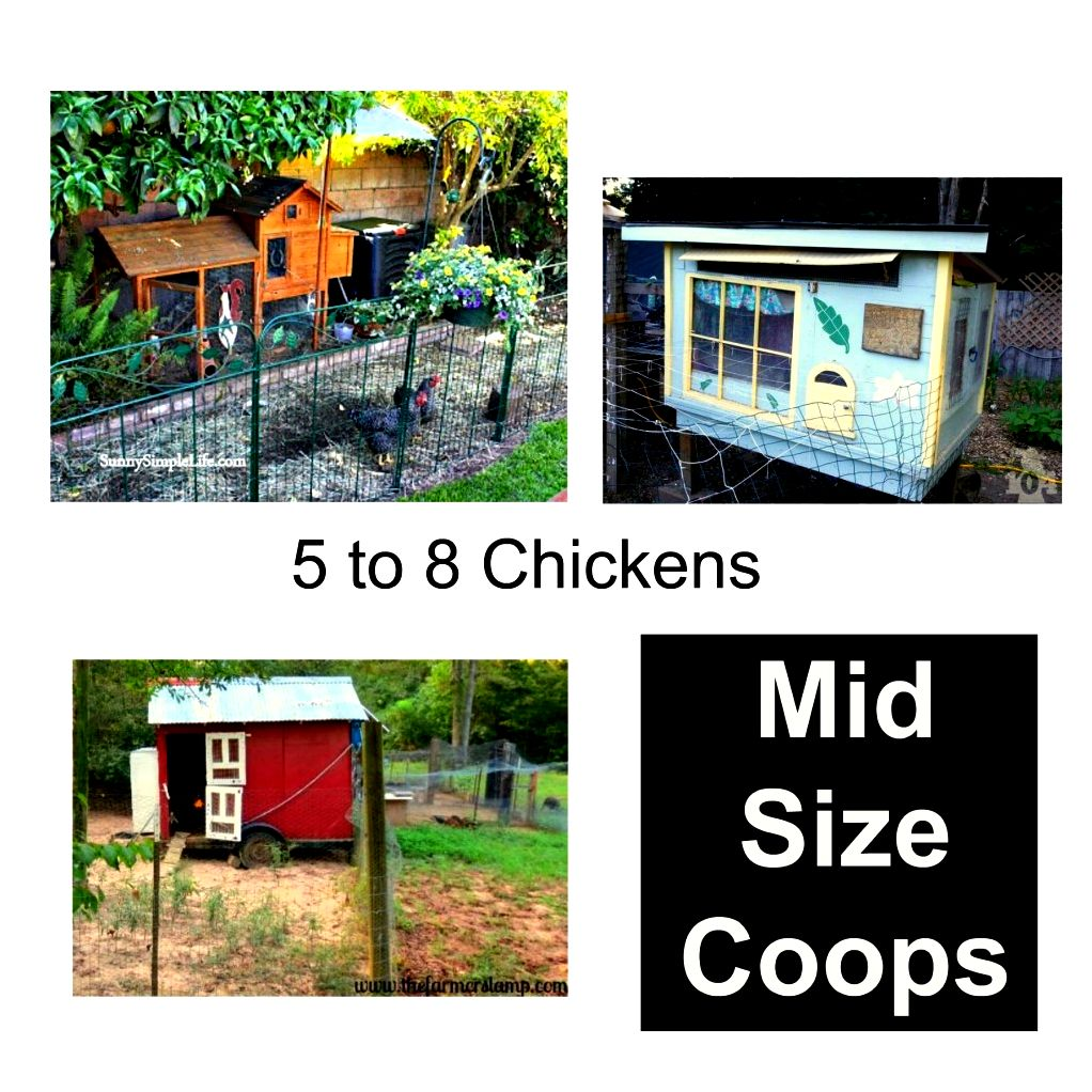 chicken coop design