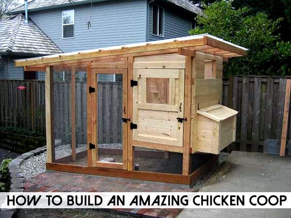 It's not necessary to become a carpenter to construct your personal chicken house and cut costs you believe