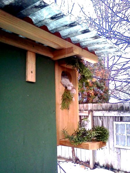 Janet built a flower box to decorate the front of her chicken coop.