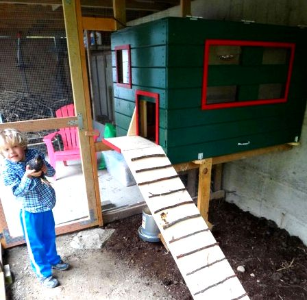 Chicken coop from plans built into shed