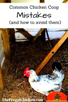 What your chicken house will include (plus...mistakes to prevent) [podcast] per chicken